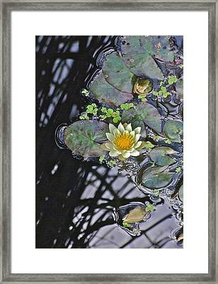 September White Water Lily Framed Print by Janis Nussbaum Senungetuk