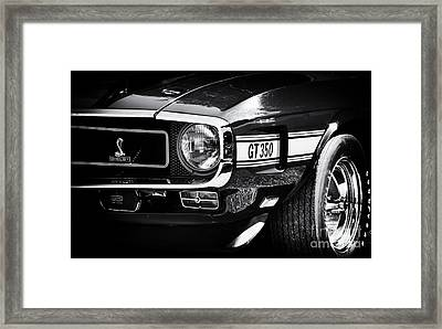 Shelby Gt350 Framed Print by Tim Gainey