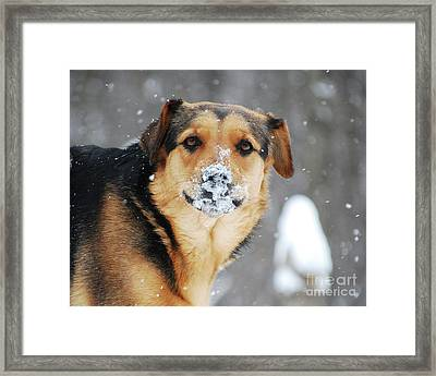 Framed Print featuring the photograph  Snow Smile  by Lila Fisher-Wenzel