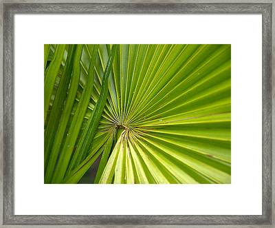Spiny Fiber Palm Framed Print