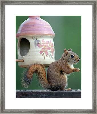 Squirrel Chatter Framed Print