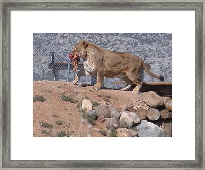 Framed Print featuring the photograph  Steak For Supper by Jeanette Oberholtzer
