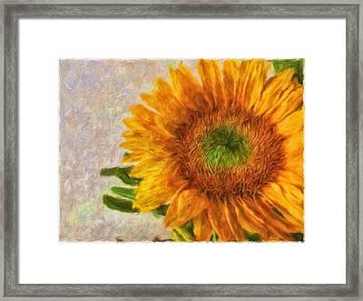 Sunflower 2 Framed Print by Jonathan Nguyen