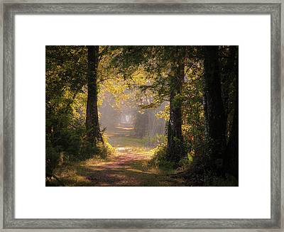 Swamp Trail Framed Print
