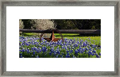 Texas Bluebonnets IIi Framed Print