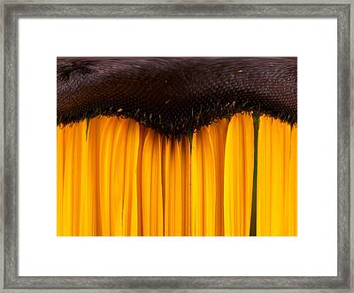 The Curtains Framed Print
