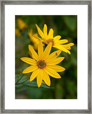 The Jerusalem Artichoke Framed Print