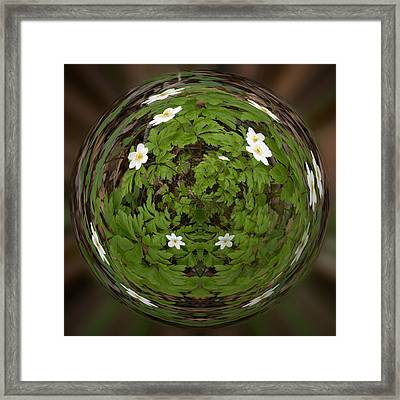 This Little Anemone  Planet 4 Framed Print by Jouko Lehto