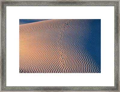 Tracks At First Light In Death Valley Framed Print by Sandra Bronstein