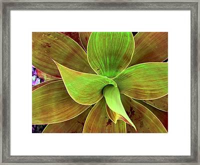 Translucense Framed Print