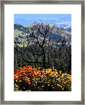 Tree And Poppies Framed Print by Gary Brandes