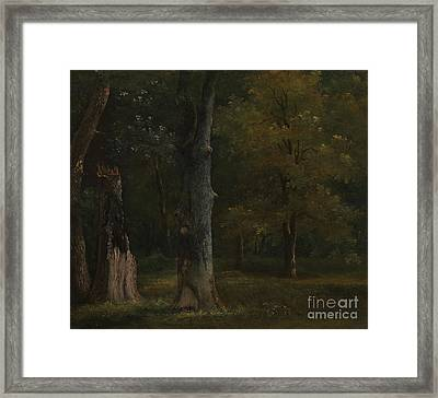 Trees In The Bois De Boulogne Framed Print