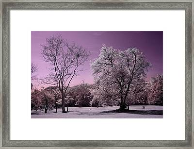 Tropical Rainforests Framed Print by Mario Bennet