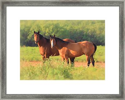 Two Horses Watching Framed Print