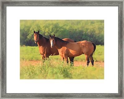 Two Horses Watching Framed Print by Elizabeth Budd