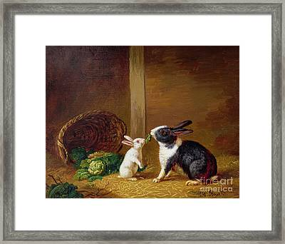 Two Rabbits Framed Print