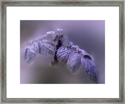 Waiting Of Winter  Framed Print