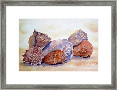 Whelks Framed Print