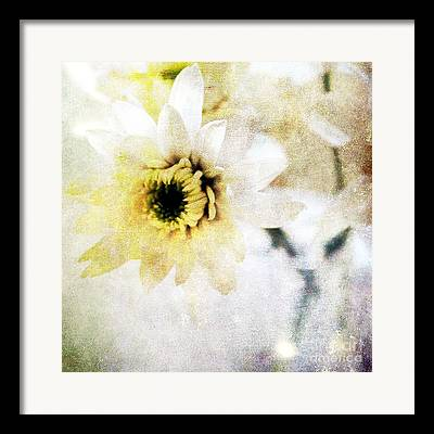 Flowers Yellow Daisy Framed Prints