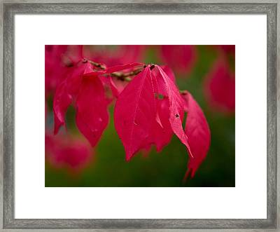 Winged Spindle Framed Print