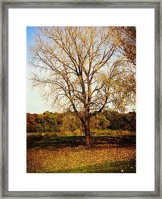Wisdom Tree Framed Print by Kyle West
