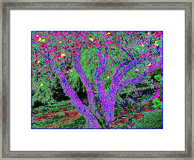 007h  Abstract Arcadia Tree Framed Print by Ed Immar