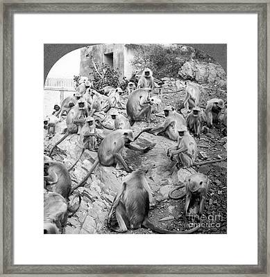 India: Monkey Temple Framed Print