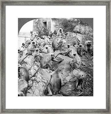 India: Monkey Temple Framed Print by Granger