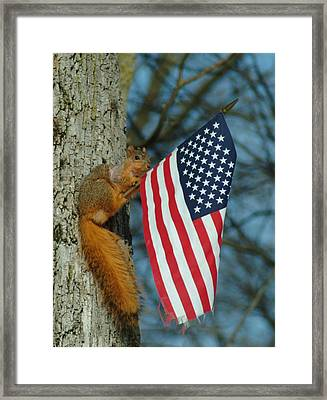 010510-4   One Patriotic Squirrel Framed Print by Mike Davis