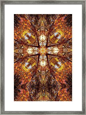 016 Framed Print by Phil Koch