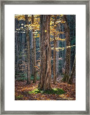 #0187 - Dummerston, Vermont Framed Print