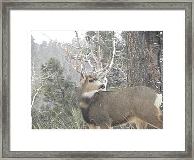 Buck Front Yard Divide Co Framed Print