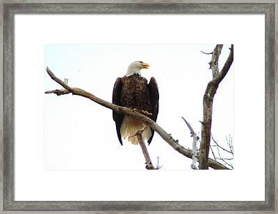 021609-18 Framed Print by Mike Davis