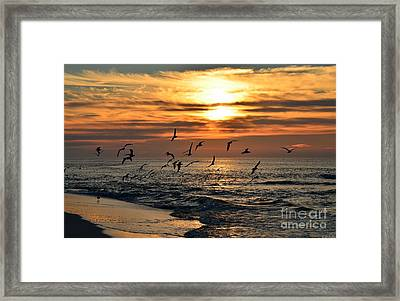 0221 Gang Of Gulls At Sunrise On Navarre Beach Framed Print