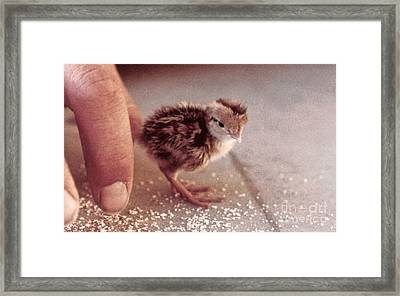 02_contact With Nature Framed Print
