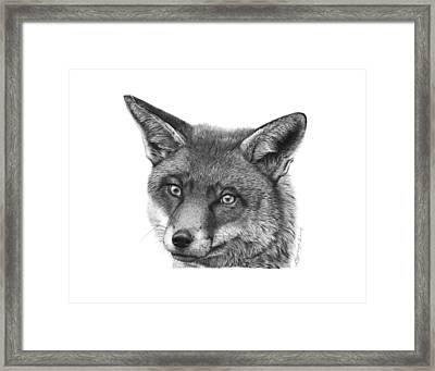 Framed Print featuring the drawing 044 Vixie The Fox by Abbey Noelle