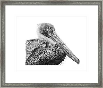 Framed Print featuring the drawing 047 - Sinbad The Pelican by Abbey Noelle