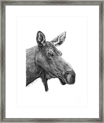 Framed Print featuring the drawing 048 - Shelly The Moose by Abbey Noelle
