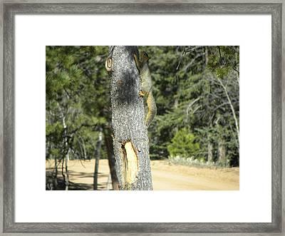 Squirrel Home Divide Co Framed Print