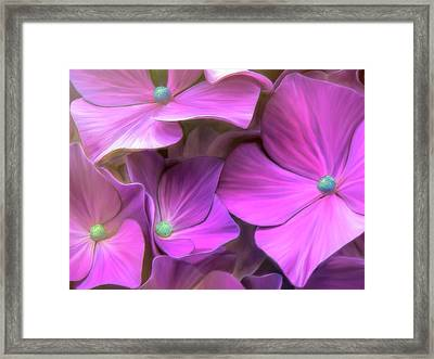 Hydrangea Florets Framed Print