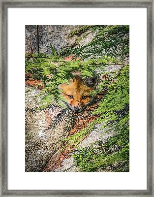 #0527 - Fox Kit Framed Print