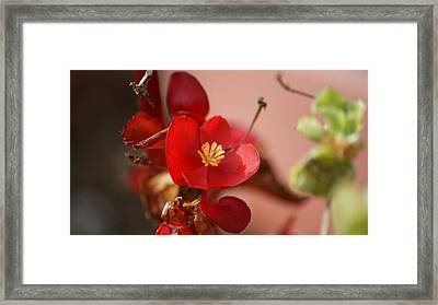 0579 Framed Print by Maria  Wall