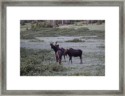 Moose Cameron Pass Co Framed Print