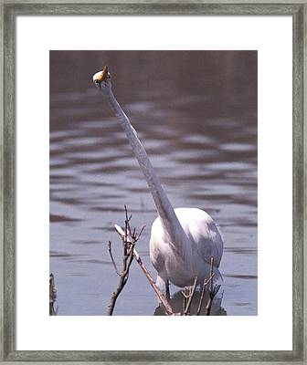 070406-9 Framed Print by Mike Davis
