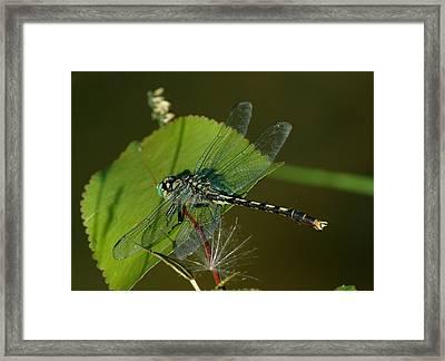 071609-176 Framed Print by Mike Davis