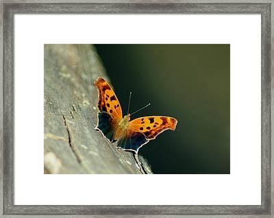 071609-211 Framed Print by Mike Davis