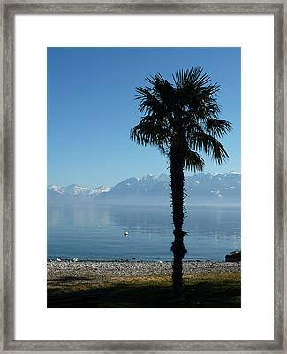09029 Framed Print by Jeffrey Freund