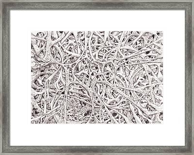 0111-4 Framed Print