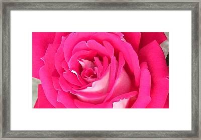 Bara Means Rose Framed Print