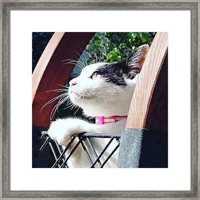Koneko Means A Kitten Framed Print